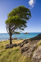 Caribbean small island